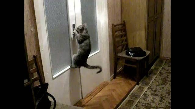 Кошка скребет и открывает дверь в комнату постоянно, как отучить?