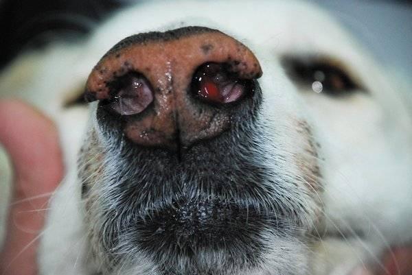 """Вялая собака: причины, диагностика, профилактика   блог ветклиники """"беланта"""""""