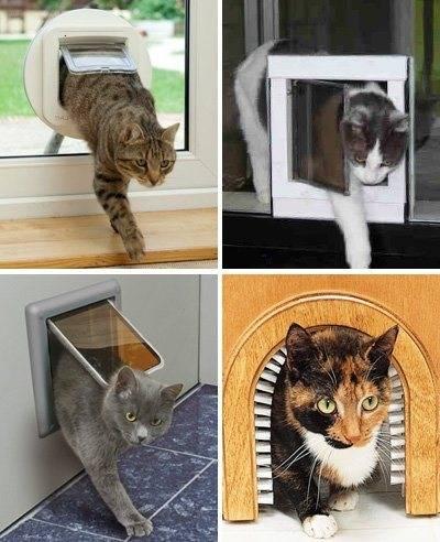 Дверца для кошек в дверь своими руками: как сделать лаз для кота?