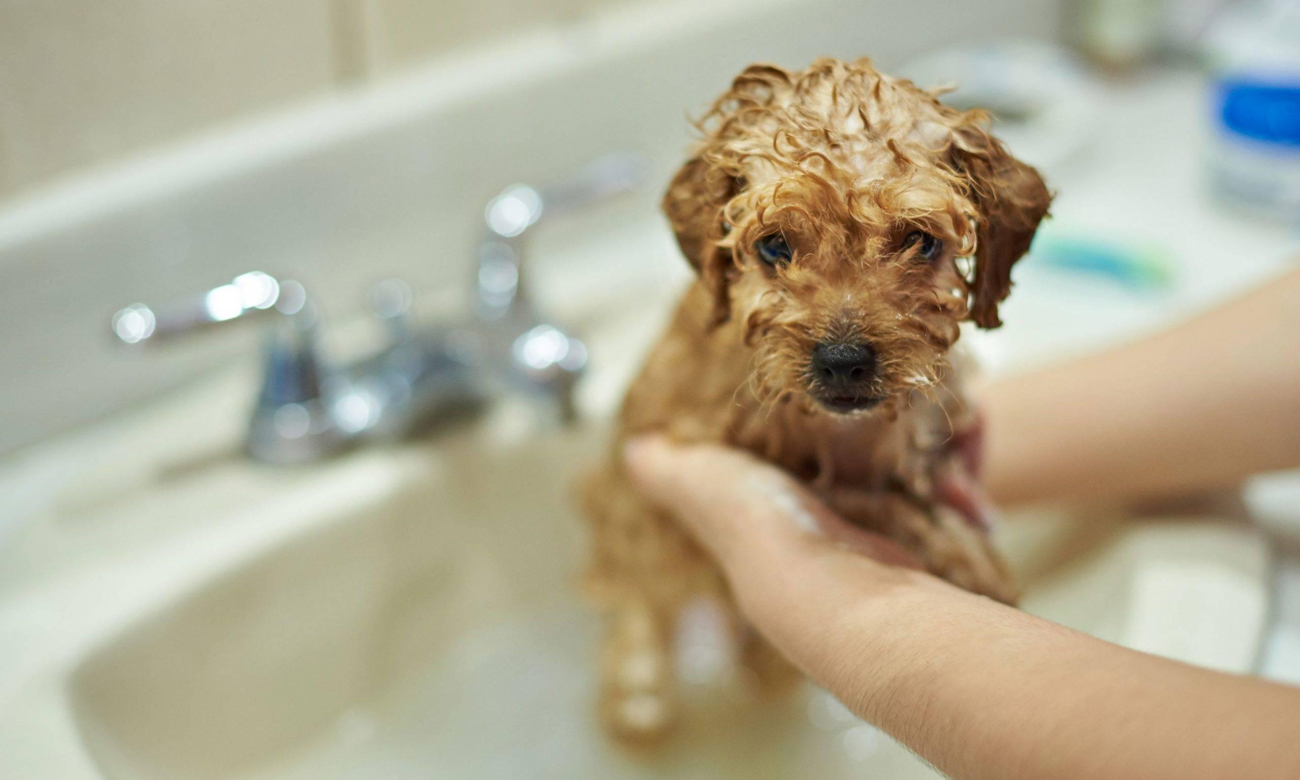 На вопрос, можно ли мыть собаку хозяйственным мылом, ответ отрицательный