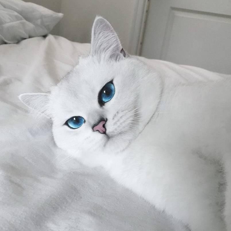 Кот коби: белая кошка с красивыми глазами, порода или кличка