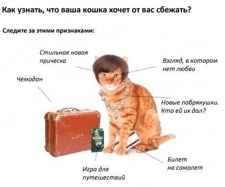 Как помочь кошке быстрее адаптироваться к новому хозяину