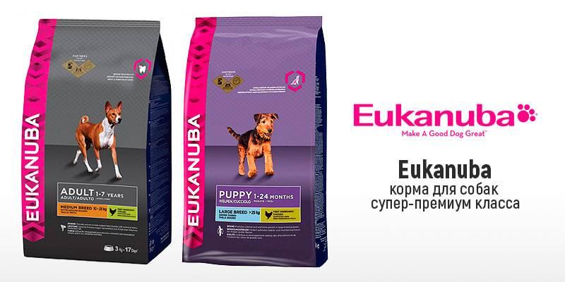 Рейтинг сухих кормов для собак: эконом, премиум и супер-премиум класс