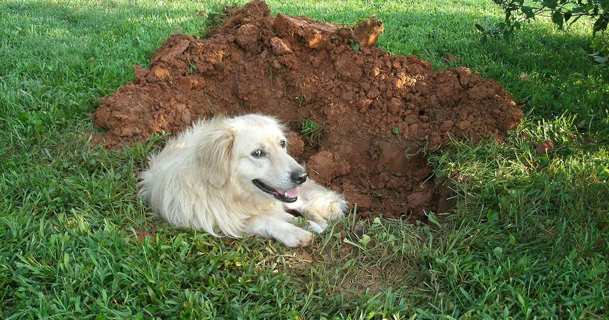 Почему собака ест землю?