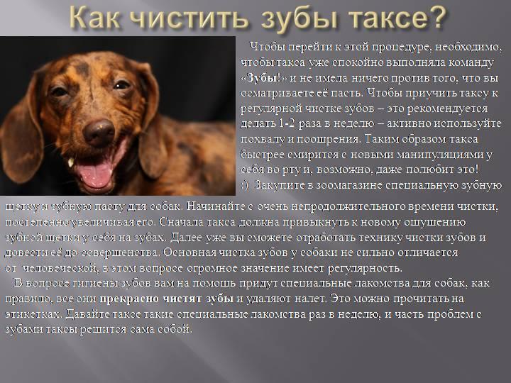 Характер у собаки – воспитание, выбор породы, советы