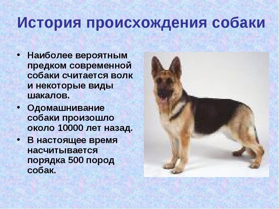 Самая первая собака в мире » vmiresobak