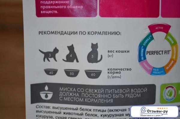 Ожирение у кошек - руководство по кормлению кошки с избыточным весом