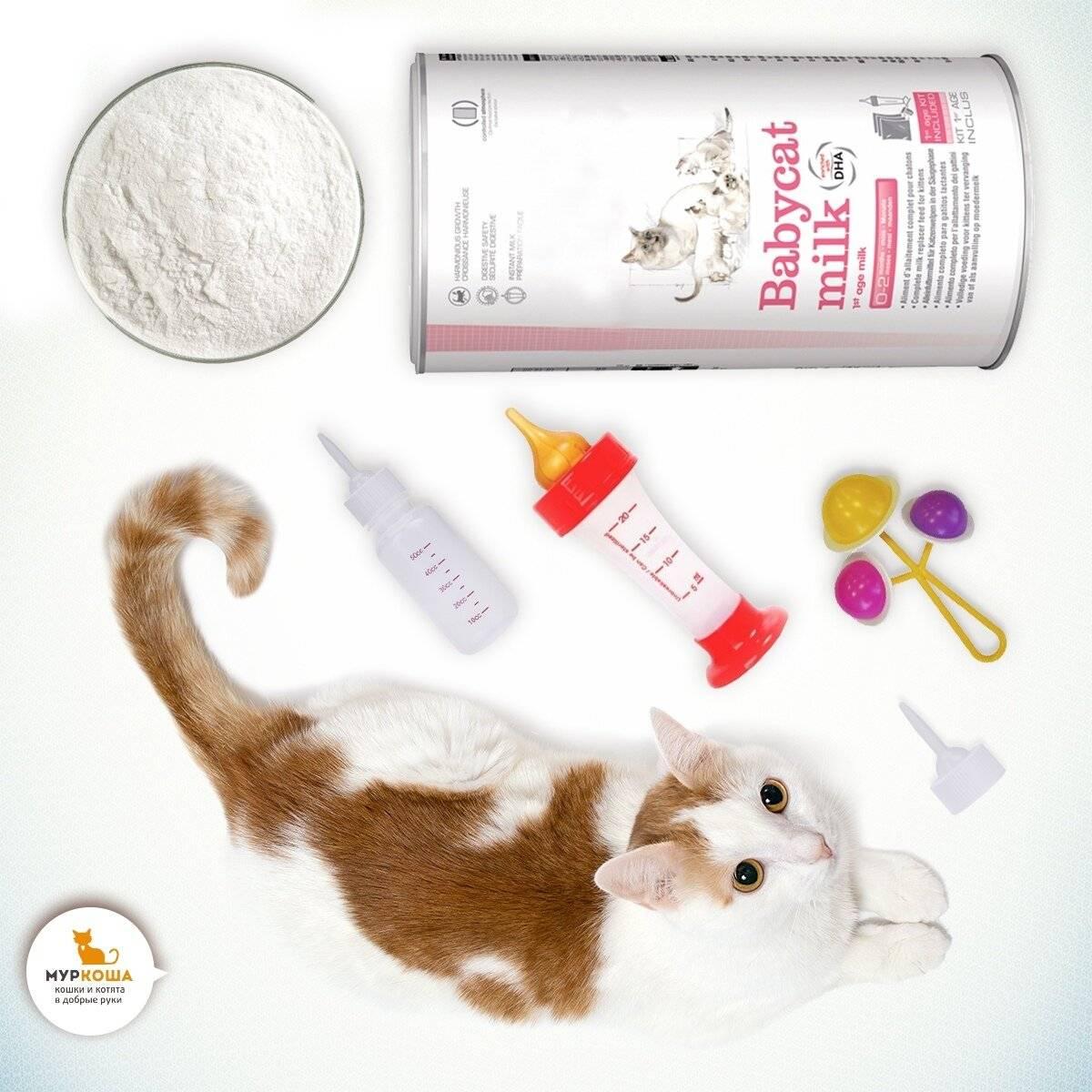 Как ухаживать за новорожденными котятами без мамы-кошки