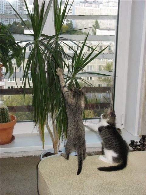Способы предотвращения порчи рассады домашней кошкой