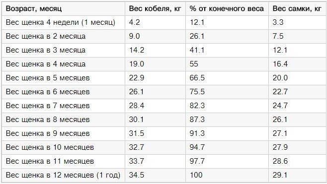 Фото щенков алабая с 1 по 12 месяц: вес и рост по месяцам - petstime.ru
