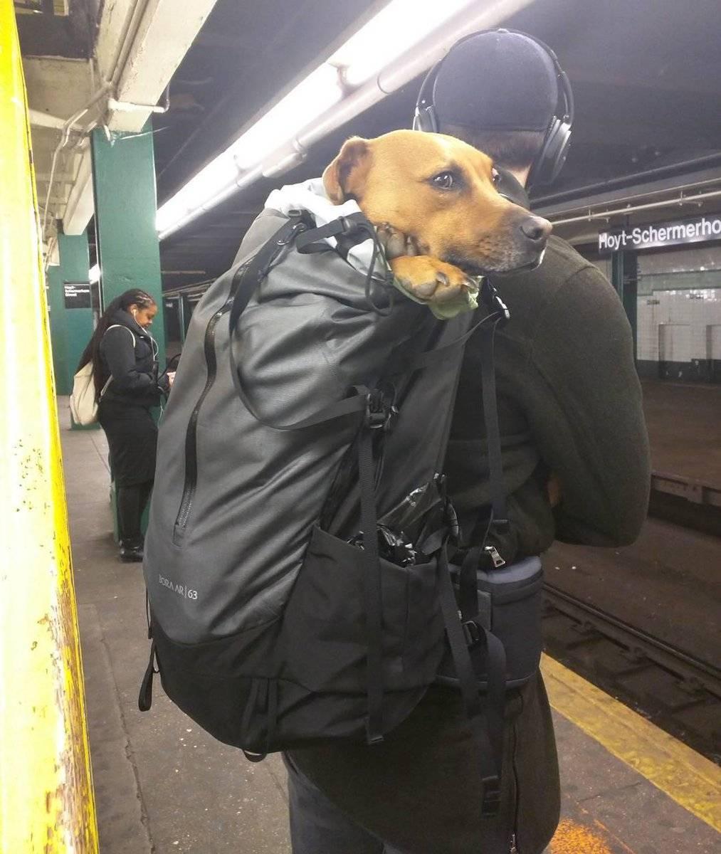 Можно ли ездить в метро с собакой?