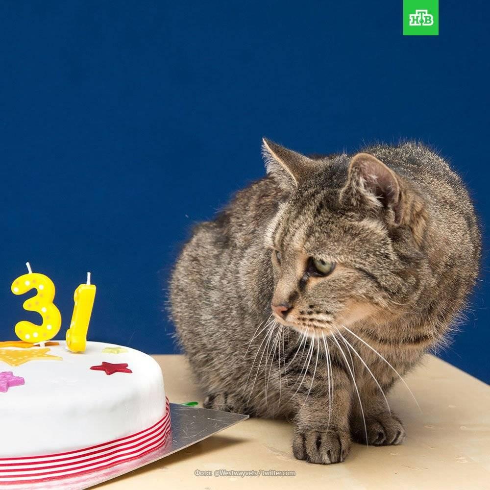 Сколько живут кошки и коты