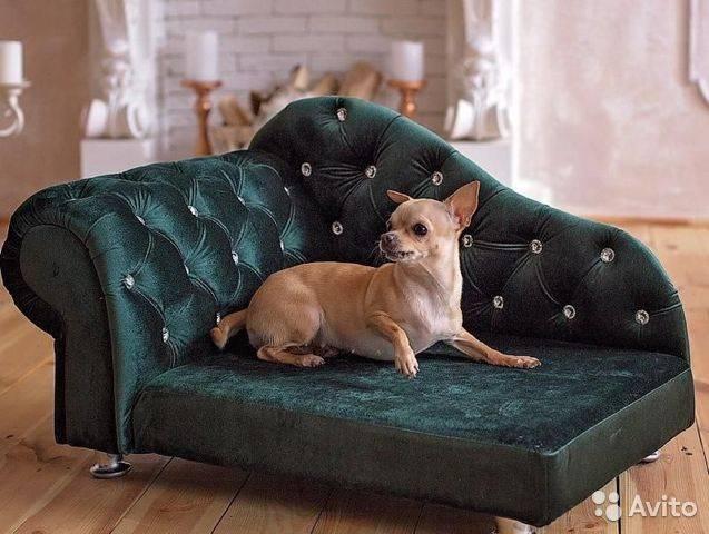 Лучшие лежанки для собак: описание популярных товаров со всеми достоинствами и недостатками.
