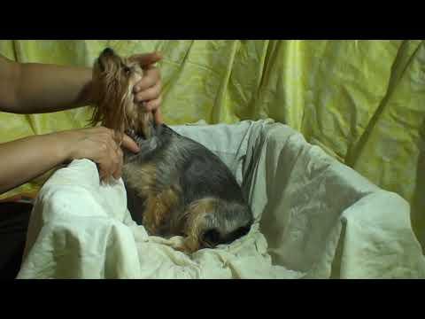 Как понять, что скоро у собаки начнутся роды - отвечает  ветврач