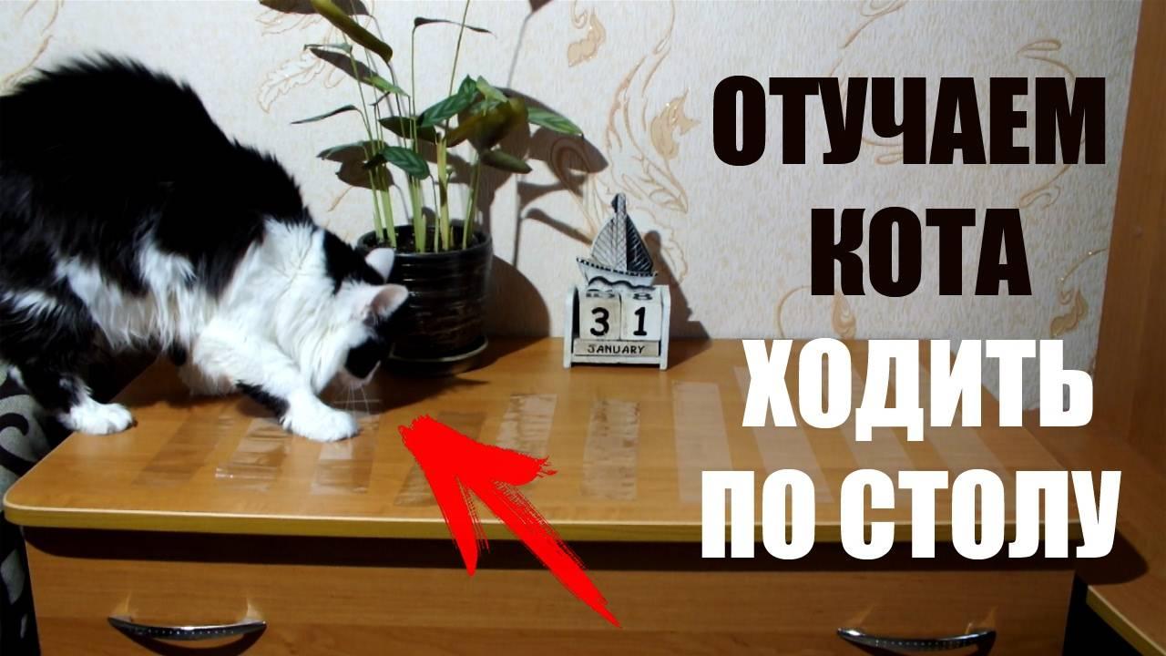 10 методов отучить кошку лазить по шторам