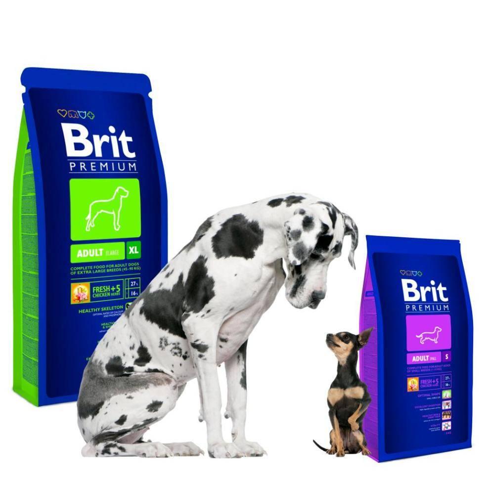 Корм для собак brit care: отзывы, разбор состава, цена - петобзор
