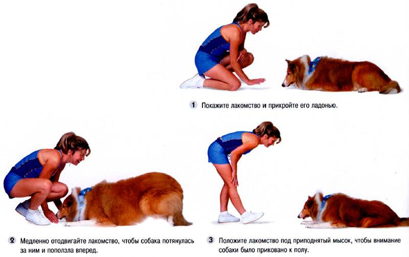 Как научить щенка командам - практические советы