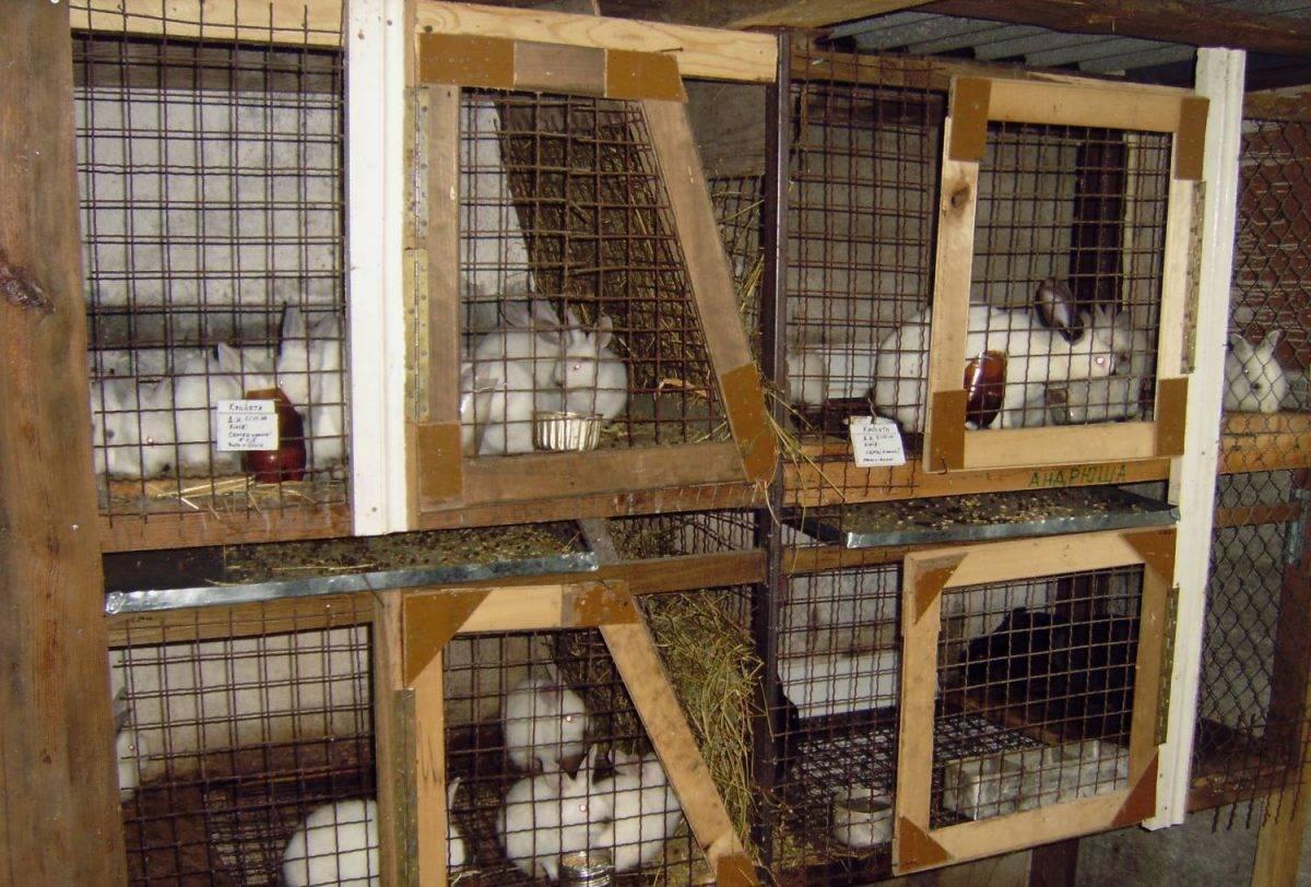 Разведение кроликов в домашних условиях для начинающих: содержание и породы
