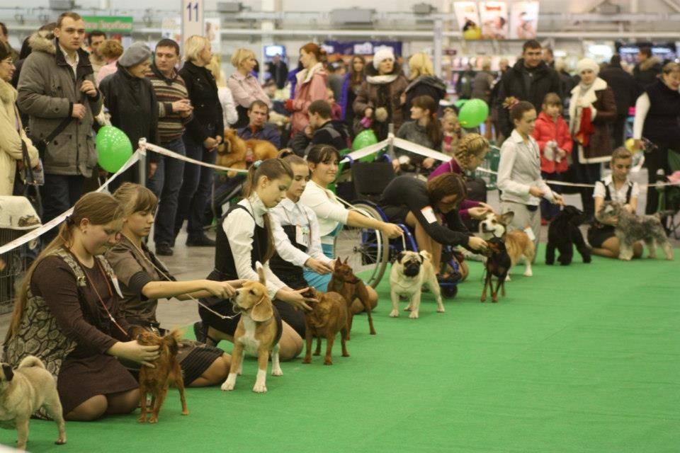 Zooпортал.pro :: интернациональная выставка собак ранга cacib – fci