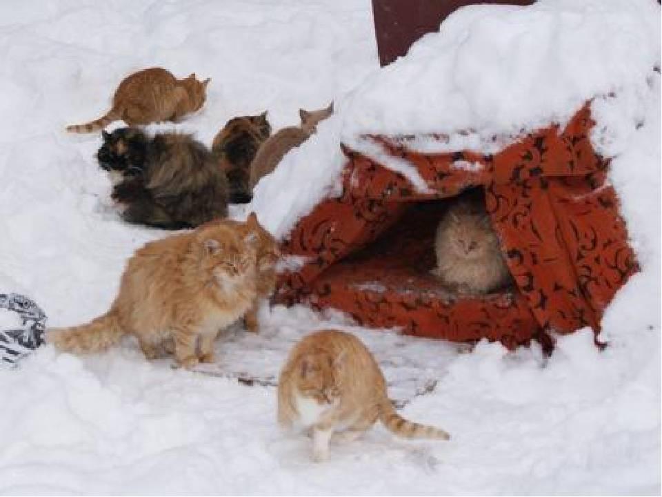 Как подружить кошку с собакой в квартире или доме — pet-mir.ru