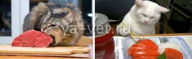 Поликистоз яичников у кошки: причины, признаки и лечение