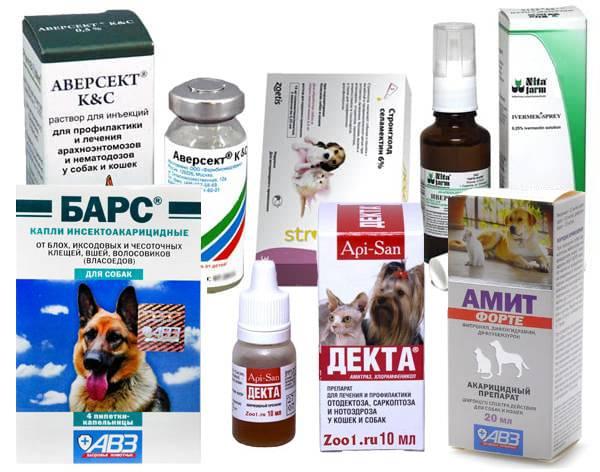 Отодектоз у кошек (otodectes cynotis) - лечение