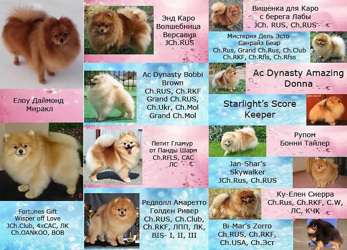 Кличка для бигля девочки или мальчика: как назвать кобеля или суку данной породы собак, а также подборка английских и иных имен
