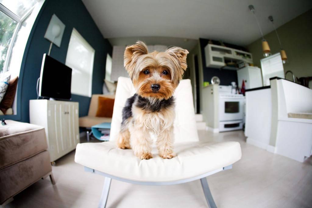 Породы собак для квартиры: топ 30 с фото и названиями