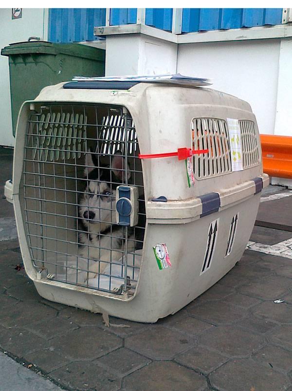 Размеры переноски для собак в самолет