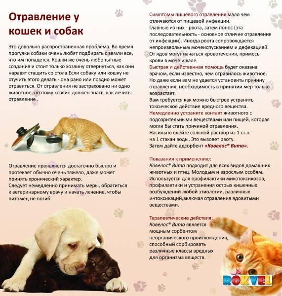 Как отучить собаку метить дома и в общественных местах