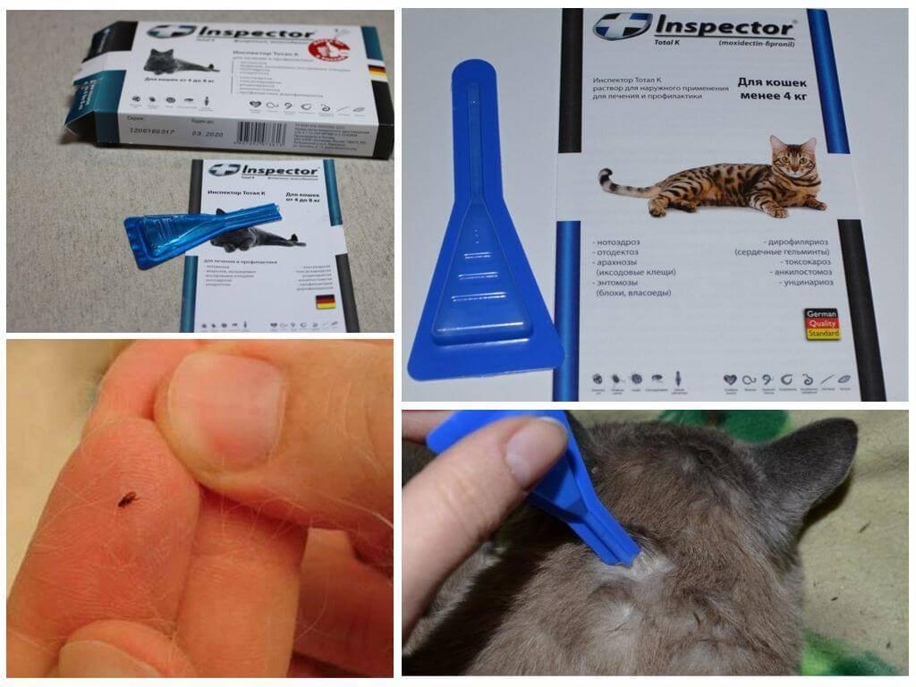 Инспектор для кошек:  капли на холку от блох, клещей и глистов