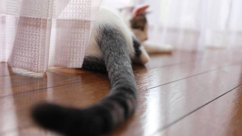 Почему кошка постоянно машет хвостом. почему коты виляют хвостом