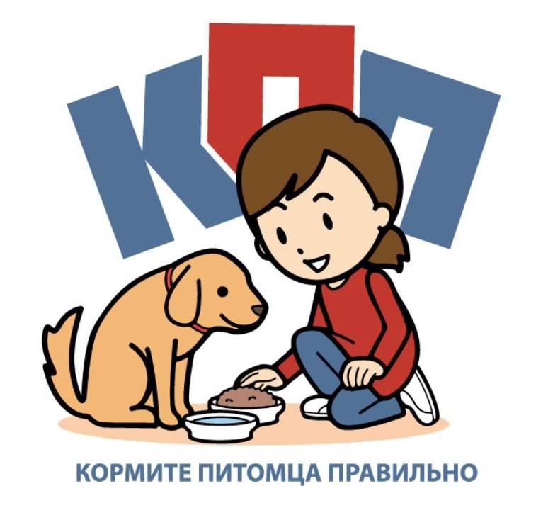 В россии запущен необычный сервис помощи бездомным животным teddy food | блог veggie people