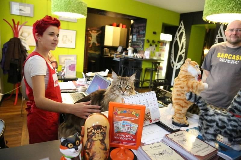 Кафе с котиками в санкт-петербурге