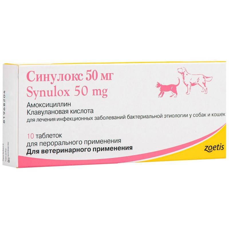 Синулокс для собак: инструкция по применению, эффективность, отзывы ветеринаров