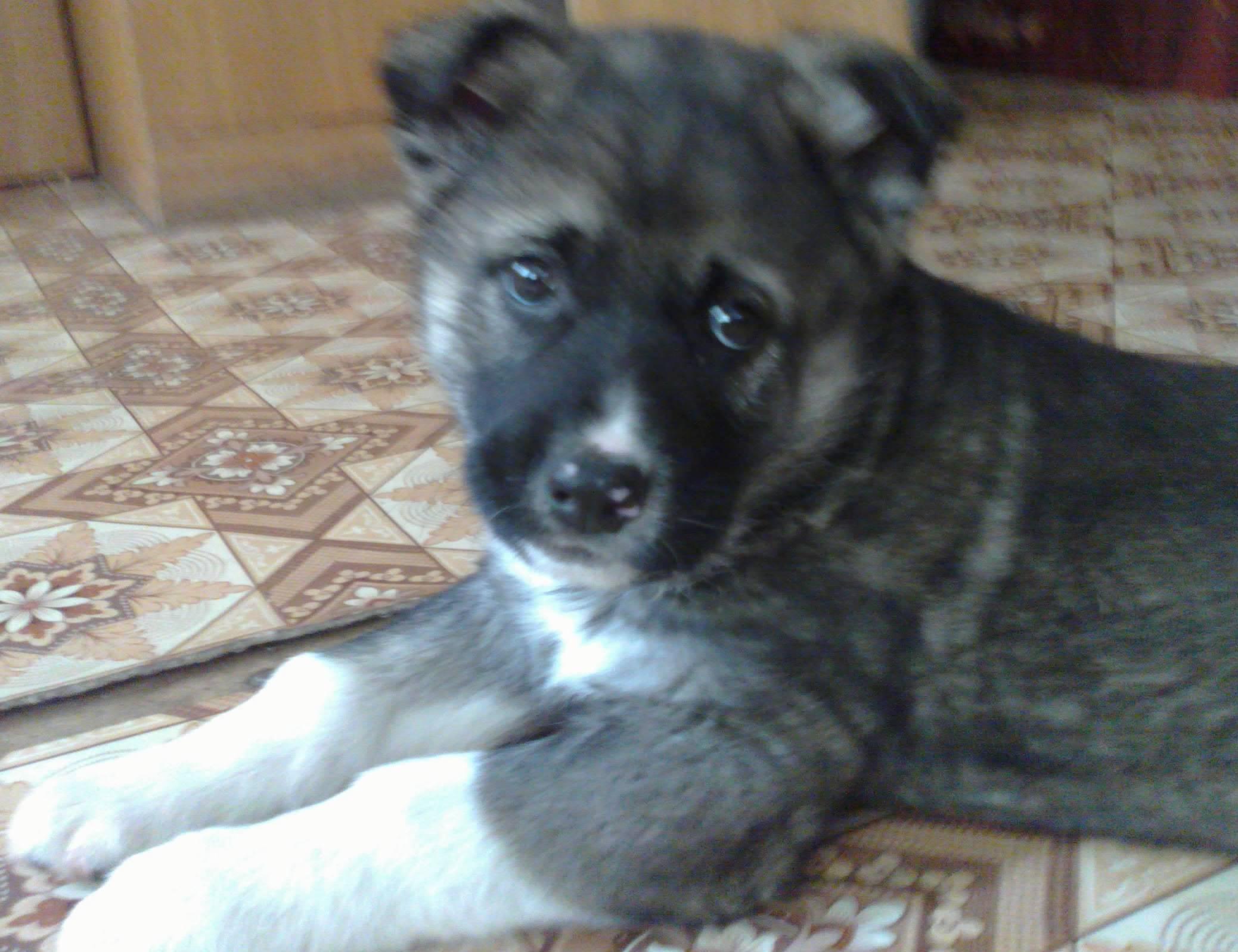 Как определить породу собаки – по внешнему виду, по фото, по щенку