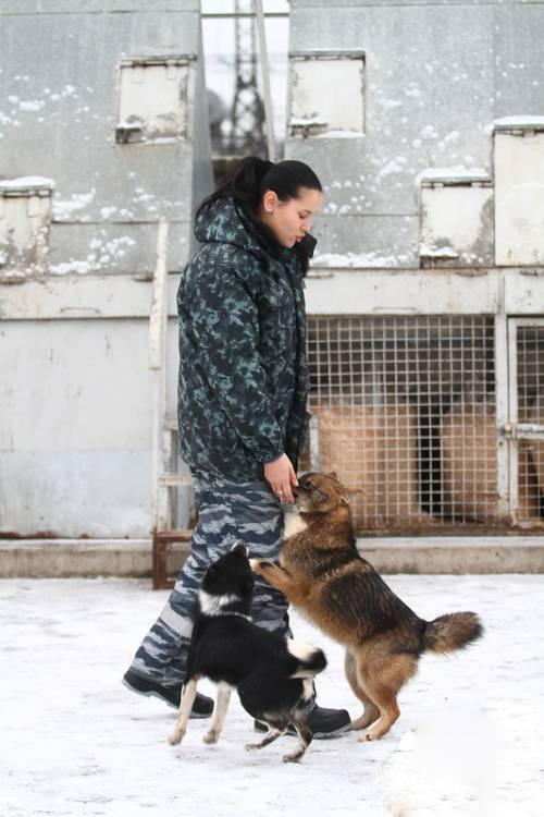 Собака сулимова. описание, особенности, уход и содержание породы | живность.ру