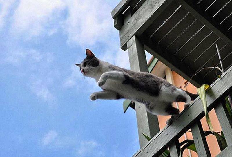 Что делать, если вы нашли животное на улице