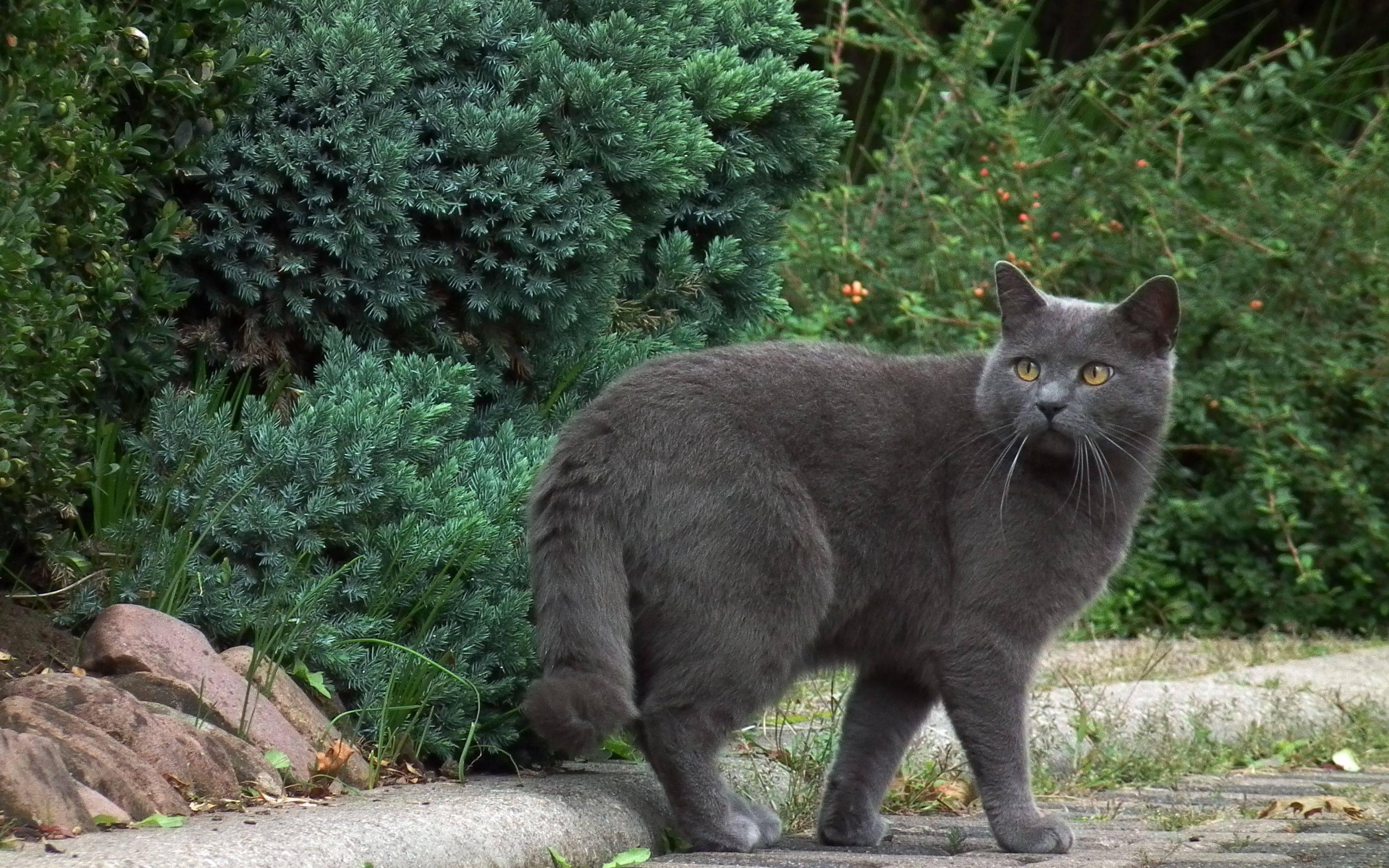 Почему кошка ходит за мной по пятам и мяукает без причины |