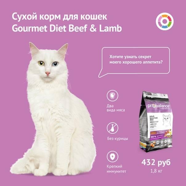 Учитывать ли рейтинг кормов для кошек, выбирая сухой корм?