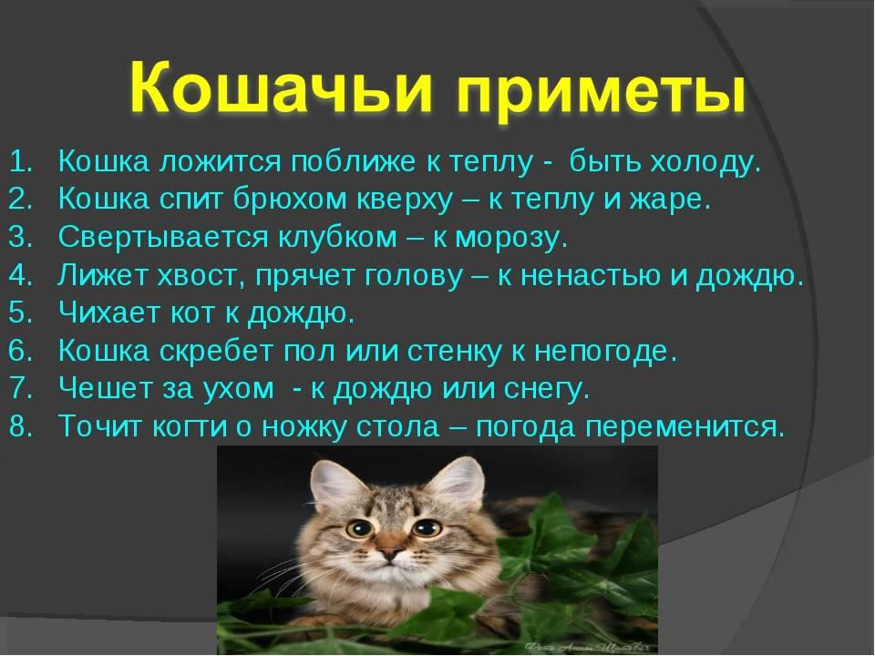 Агрессия у кошек: причины, виды и способы коррекции
