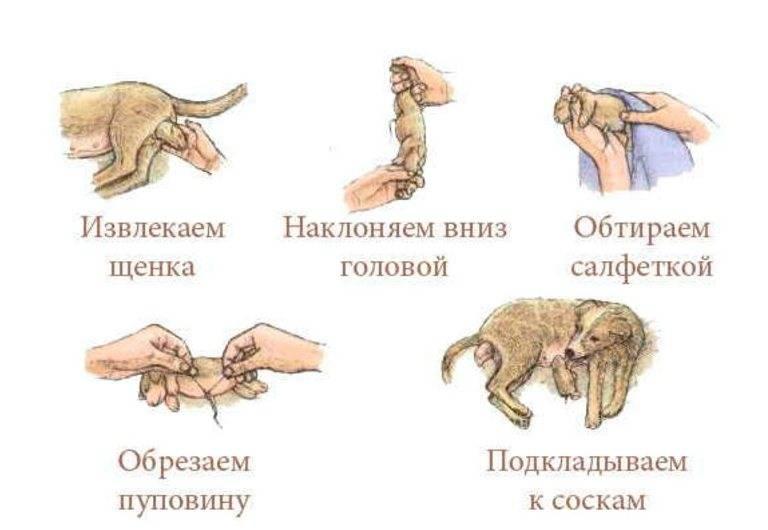 Роды кошки: как понять, что ей скоро рожать, что нужно при этом делать