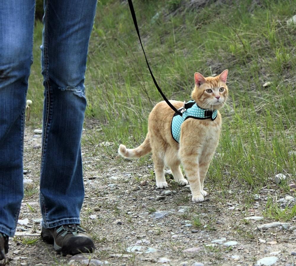 Как отучить кошку от улицы весной или летом