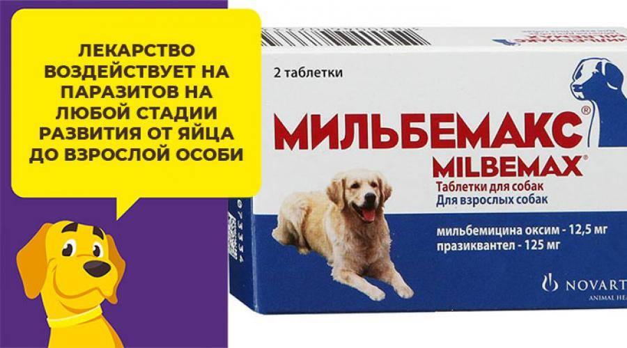 Дипентавак для собак: показания и инструкция по применению, отзывы, цена