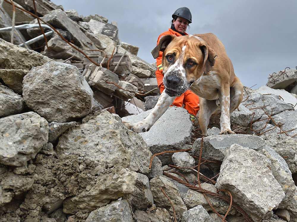 Какие собаки помогают спасать альпинистов: порода, название