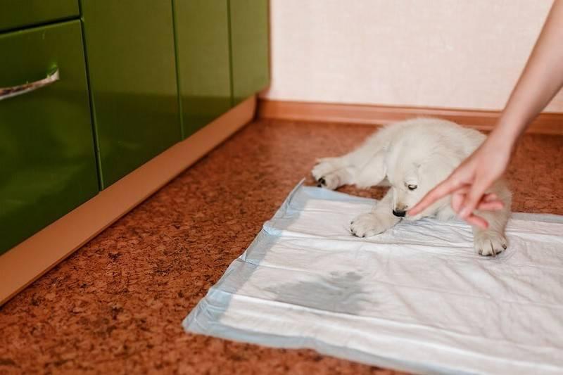 Как приучить щенка к туалету [фото]