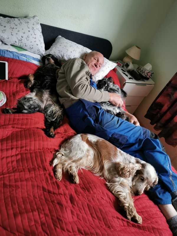 """Собака гадит дома и метит территорию: причины и методы борьбы   блог ветклиники """"беланта"""""""