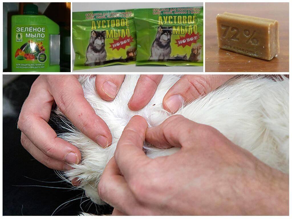 Можно ли мыть собаку хозяйственным мылом, как и чем мыть собаку