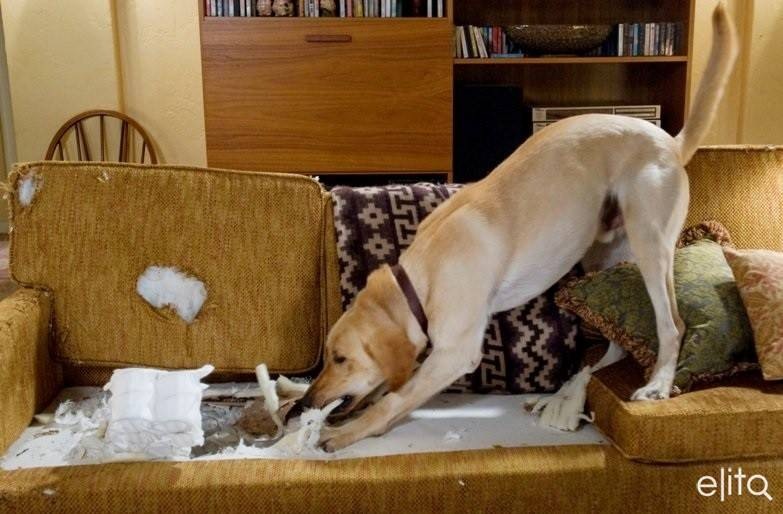 Как отучить собаку грызть мебель – 8 простых и верных способов