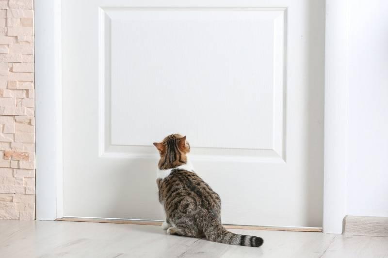 Какого завести питомца: кот или кошка и какая порода лучше